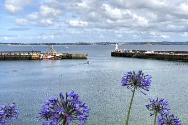 A fishing harbour with purple flowers in the foreground
