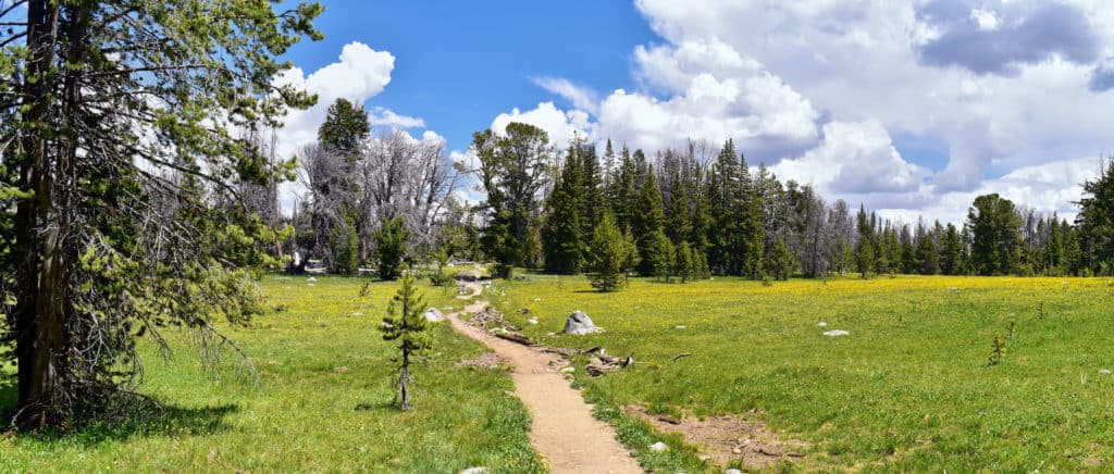 Open grassland on the Continental Divide trail with a pathway shown through the middle.